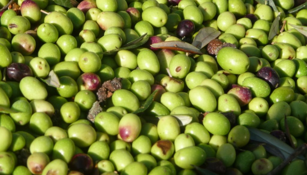 Italy Food Roots Olive Farm-to-Table Tour